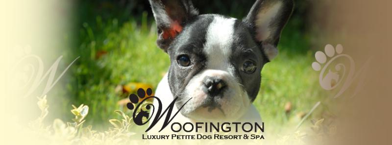 Woofington-image-3